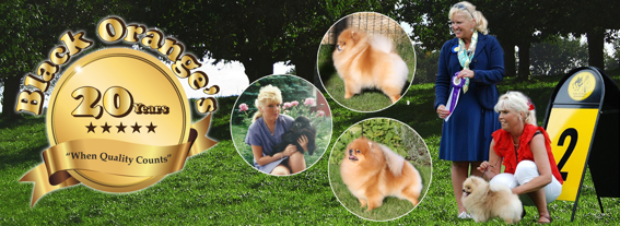 Anniversary - It's 21 years since we bred our very first Pomeranian litter