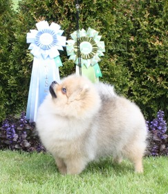 Best In Show - 4 baby x 2 in Gørlev Denmark 23-24 May