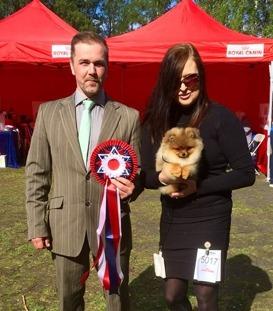 Zazzy BIS puppy under judge Roy Fjerdingby