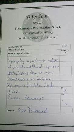 Kritik av domare Kjell Carnbrand. BIS-2 valp
