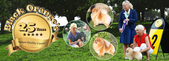Anniversary - It's 25 years since we breed our very first Pomeranian litter