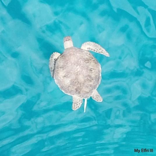 Delta Goodrem dating Seal 2013