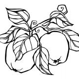 Kuddmotiv, äpplen från roslagen