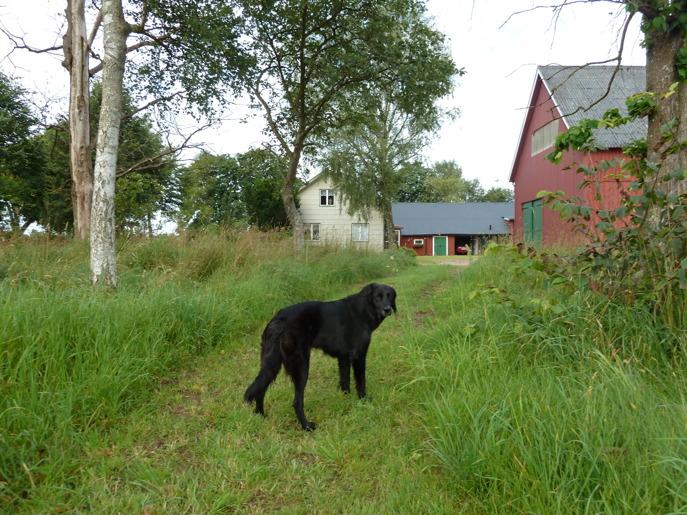 Söker du hundkurs? Hundkurser för bara dig & din hund hos hundinstruktör Susanne utanför Laholm, mellan Båstad & Halmstad norr om Ängelholm.  Hundkurserna…