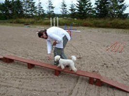 Hundkurs Healingstugan i Laholm mellan Halmstad och Båstad