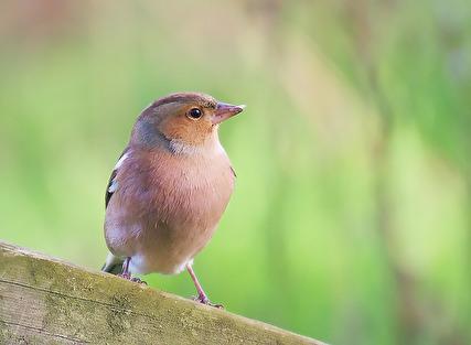 Upptäck dina förmågor o din kraft o dina vingar ska bära dig. Fågelns budskap ur Solögas bok Djurens Språk.
