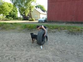 Hundkurs på Healinstugan utanför Laholm