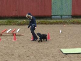 Hundkurs Healingstugan Laholm mellan Halmstad o Båstad
