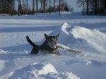 Vinterbilder 016