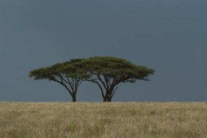 Serengeti shall never die.