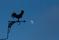 Månbilder-82