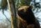 Björn njuter