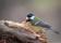 Småfåglar-5