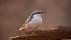 Småfåglar-2