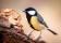 Småfåglar-3