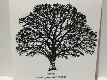 SP041 -