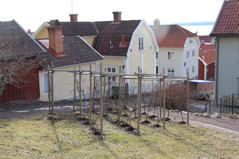 Nedre vingården 14 april.
