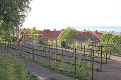 Övre vingården 2013-09-07