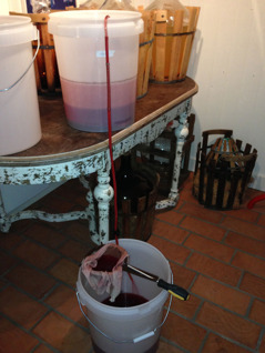 Lovande druv-vin 2013. Vinet stod först för jäsning i rumstemperatur drygt en månad innan det tappades om. Sedan stod det i jäshinken ytterligare ca en månad, dock vid en lägre temperatur 10-13 grader. Därefter omtappning till damejeanner och där ska det stå fram till sommaren. Vinet ser väldigt lovande ut. Den förhållandevis lilla mängden blå Schuyer-druvor (ca 5%) har gett vinet en klar rosa-röd färg. Det ska bli intressant att se hur det påverkar smaken.