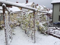 Första snön 2014-11-06