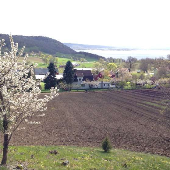 Maj 2015 före plantering.